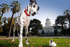 世界上最大的狗和最小的狗相遇