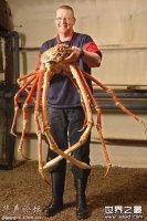 世界上最大的节肢动物