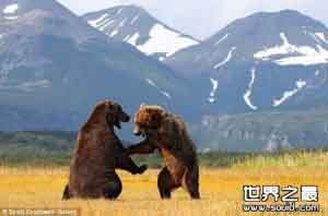 世界上最大的食肉类动物