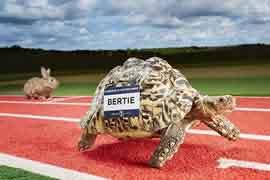 世界上爬行最快的乌龟,再也不怕输给兔子了