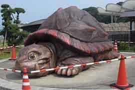 世界上最大的乌龟,象龟(长6米/重700斤)